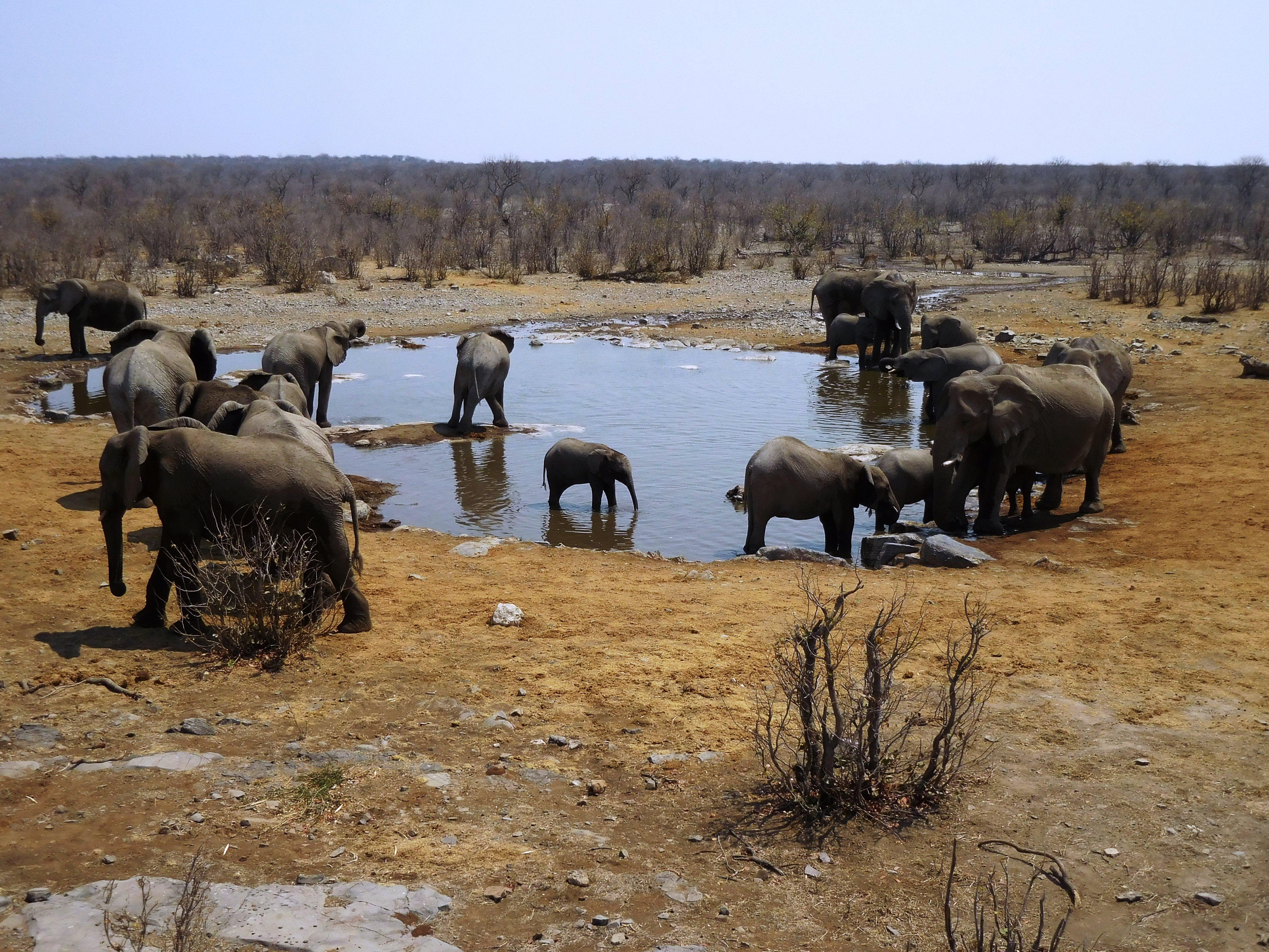 Elefanten am Wasserloch im Etosha-Nationalpark, Namibia