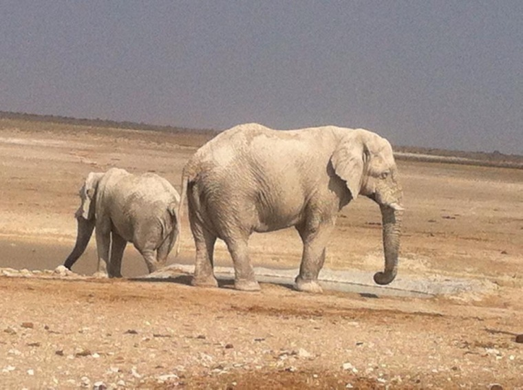 Zwei Elefanten im Etosha-Nationalpark, Namibia