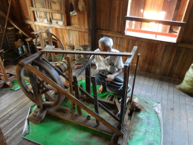 alter Burmese spinnt Faden