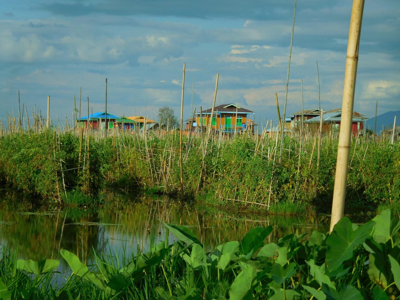 Schwimmende Gärten auf dem Inle See, Myanmar/Burma