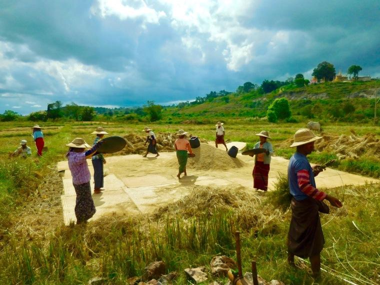 Reisverarbeitung in Myanmar/Burma