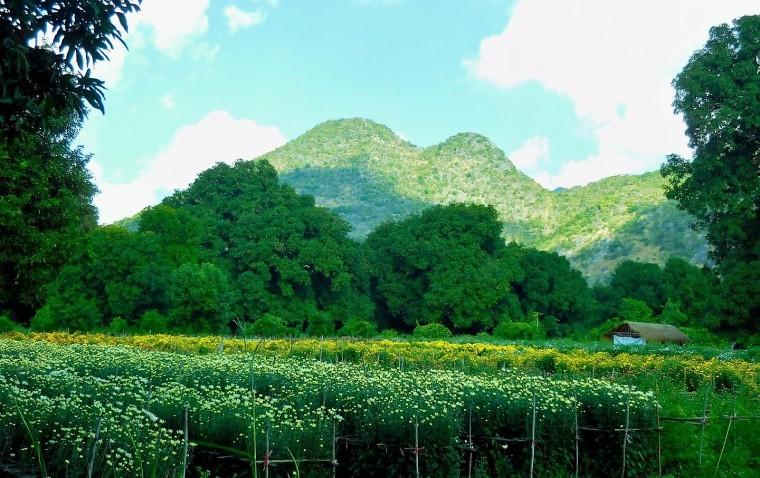 Blumenfeld in Myanmar/Burma